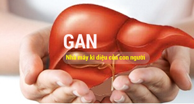 Top 6 loại thuốc bổ gan, mát gan, giải độc gan tốt nhất