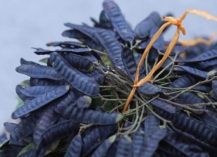 Bồ kết là vị thuốc quen nhưng rất quý thường sử dụng để giúp tóc mọc nhiều, điều trị rụng tóc - mọc tóc nhanh