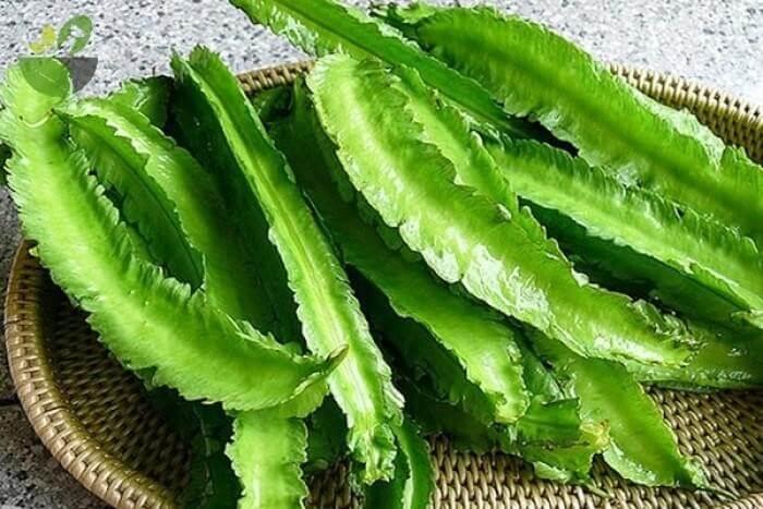 Đậu rồng là thực phẩm tốt cho dạ dày, còn được chế biến với nhiều bài thuốc đông y chữa viêm dạ dày cấp