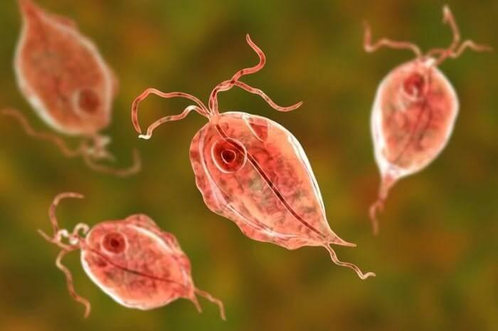 Trichomonas – ký sinh trùng gây nên viêm âm đạo và viêm nhiễm các bệnh tình dục ở nữ giới