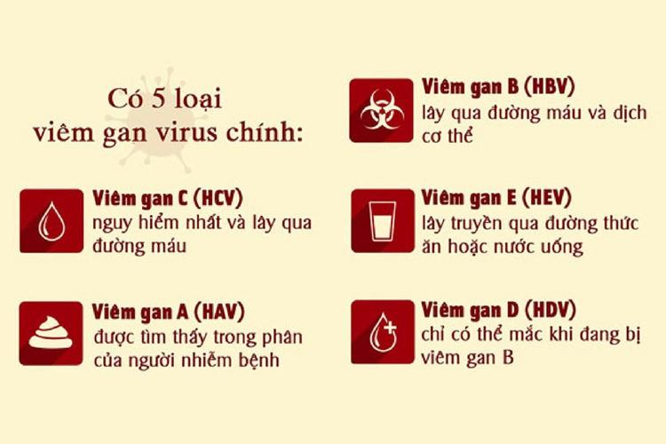Có 5 loại viêm gan siêu vi, Việt Nam là nước có dịch tễ siêu vi viêm gan B,  C - Dân Khang Pharma