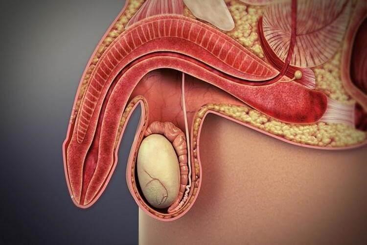 Nguy cơ tái phát lại bệnh rối loạn cương dương là có, và tỉ lệ rất cao
