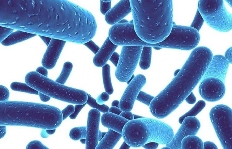 Men tiêu hóa hỗ trợ cho việc điều trị các bệnh về rối loạn tiêu hóa, đường ruột