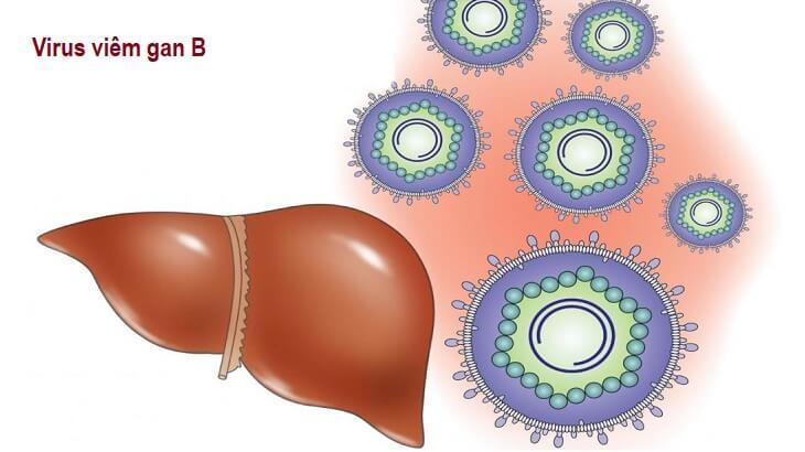 Những điều bạn cần biết về Virus viêm gan B [A-Z]