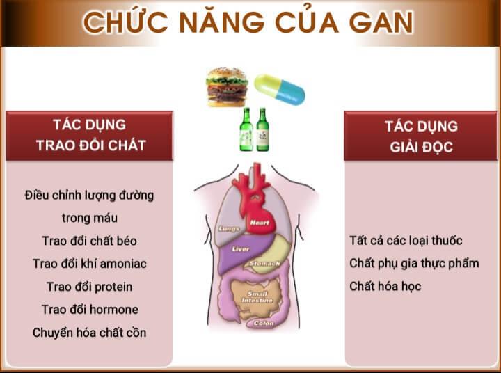 Một số chức năng của gan