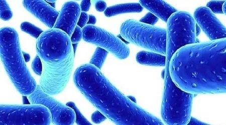 Sữa chua cung cấp nhiều lợi khuẩn giúp cân bằng hệ vi sinh vật đường ruột